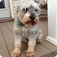 Adopt A Pet :: Dixie toy - North Benton, OH