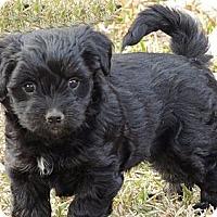 Adopt A Pet :: Spooky - La Habra Heights, CA