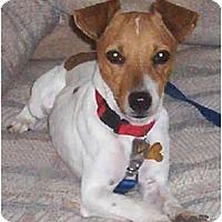 Adopt A Pet :: SQUIRT - Phoenix, AZ