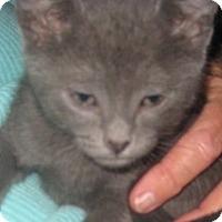 Adopt A Pet :: Boris - Dallas, TX