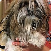 Adopt A Pet :: Kandi - Rockaway, NJ