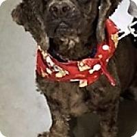 Adopt A Pet :: Toby-Adoption Pending - Sacramento, CA