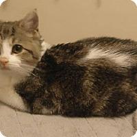 Adopt A Pet :: Ripley - Eureka, CA