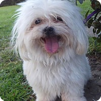 Adopt A Pet :: Sparky BB - Seattle, WA