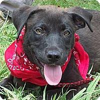 Adopt A Pet :: ASHLEY/Special Summer Price - Glastonbury, CT