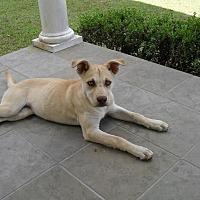 Adopt A Pet :: Buttermere - Blountstown, FL