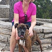 Adopt A Pet :: Mr. Pinkerton - Austin, TX
