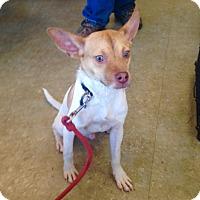 Adopt A Pet :: Taco - Pompton Lakes, NJ