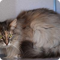 Adopt A Pet :: Dandelion - Gardnerville, NV