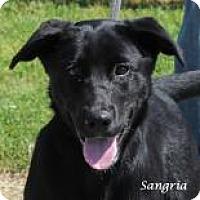 Adopt A Pet :: Sangria - Madisonville, TN