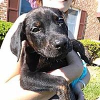 Adopt A Pet :: Troy - South Jersey, NJ