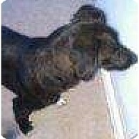 Adopt A Pet :: Taz - Alliance, NE