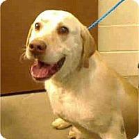 Adopt A Pet :: Cole ADOPTION PENDING!! - Antioch, IL