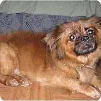 Adopt A Pet :: Tank - Tyler, TX