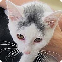 Adopt A Pet :: Coolio - Riverhead, NY