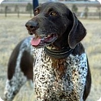 Adopt A Pet :: Easter - Cheyenne, WY