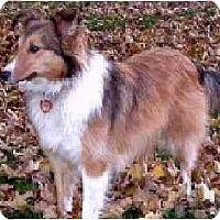 Adopt A Pet :: Bonnie - Indiana, IN