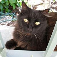 Adopt A Pet :: Oscar - Laguna Woods, CA