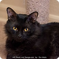 Adopt A Pet :: Buddha - Fountain Hills, AZ