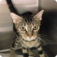 Adopt A Pet :: Natashia - Delray Beach, FL