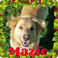 Adopt A Pet :: Mazie - Georgetown, KY