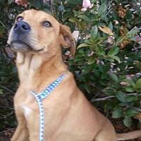 Adopt A Pet :: Chip - Beaumont, TX