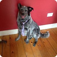 Adopt A Pet :: Ozzy - Palatine/Kildeer/Buffalo Grove, IL