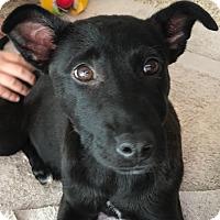 Adopt A Pet :: Dixie - Thousand Oaks, CA
