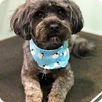 Adopt A Pet :: Brady - Staunton, VA