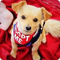 Adopt A Pet :: Pedro - Redondo Beach, CA