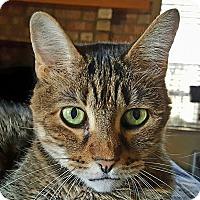 Adopt A Pet :: Sarah Milan - Phoenix, AZ