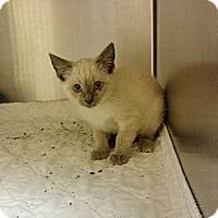 Adopt A Pet :: CSI - Armuchee, GA