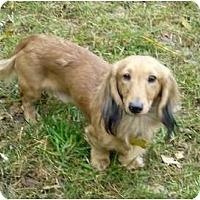 Adopt A Pet :: Rupert - San Jose, CA
