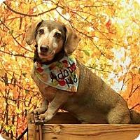 Adopt A Pet :: Timmy - Toronto, ON