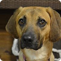 Adopt A Pet :: Wes - Lake Odessa, MI