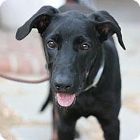 Adopt A Pet :: Loba - Canoga Park, CA