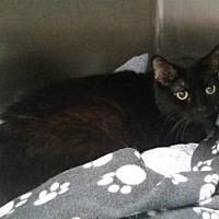 Adopt A Pet :: Sassy - Ashtabula, OH