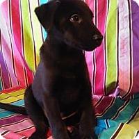 Adopt A Pet :: Sheldon - Houston, TX