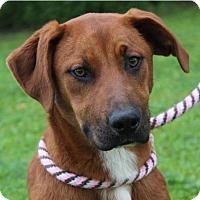 Adopt A Pet :: BEVERLY - Red Bluff, CA