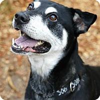 Adopt A Pet :: Rowdy - Camden, DE
