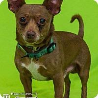 Adopt A Pet :: Mark - Sharon Center, OH