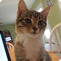 Adopt A Pet :: Honey Boo Boo - Bunnell, FL