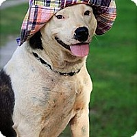 Adopt A Pet :: Brooklyn - Albany, NY