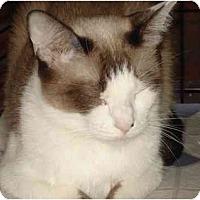 Adopt A Pet :: Rajini - Chesapeake, VA