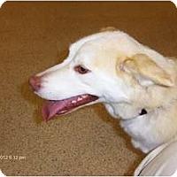 Adopt A Pet :: Honey - Orange Park, FL