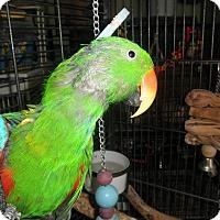 Adopt A Pet :: Woody & Gwen - Neenah, WI