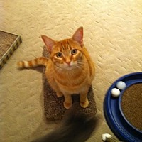 Adopt A Pet :: Josaphine - Atco, NJ
