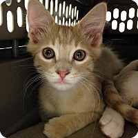 Adopt A Pet :: Thumper - Irvine, CA