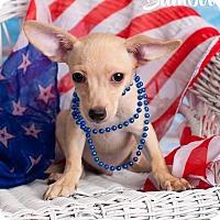 Adopt A Pet :: Bamboo - Scottsdale, AZ