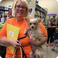 Adopt A Pet :: 49er - Las Vegas, NV